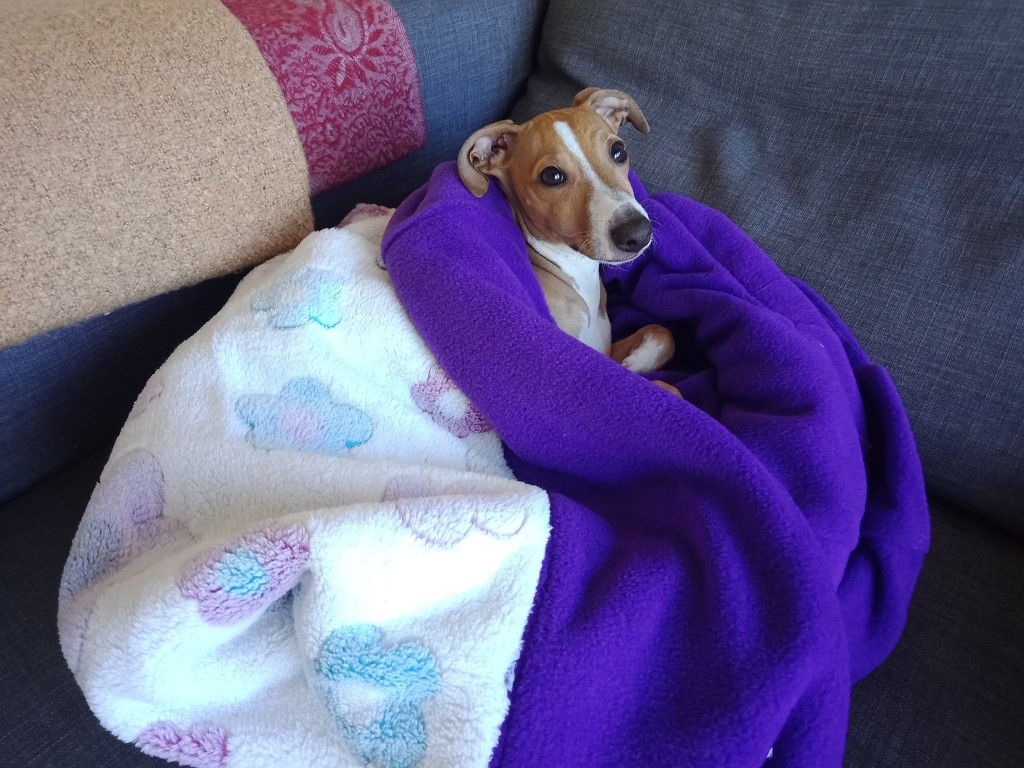 Picture of: Dog Snuggle Bed Dog Bed Pet Cave Italian Greyhound Bed Happys Doggy Beds